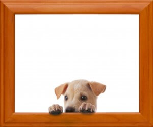 Dog With Frame by Witthaya Phonsawat