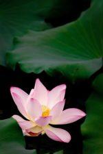 Meditazione apertura del cuore